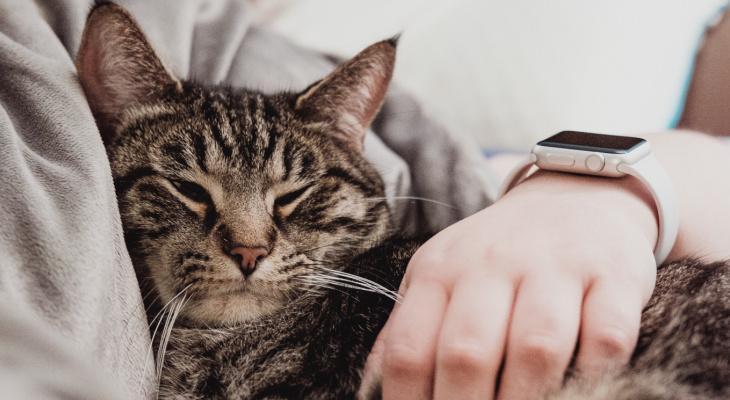 """""""Найди себе друга"""": йошкаролинцы могут приютить бездомных животных"""