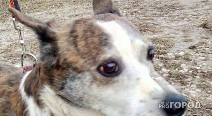 В Марий Эл сбитую собаку выкинули в овраг умирать