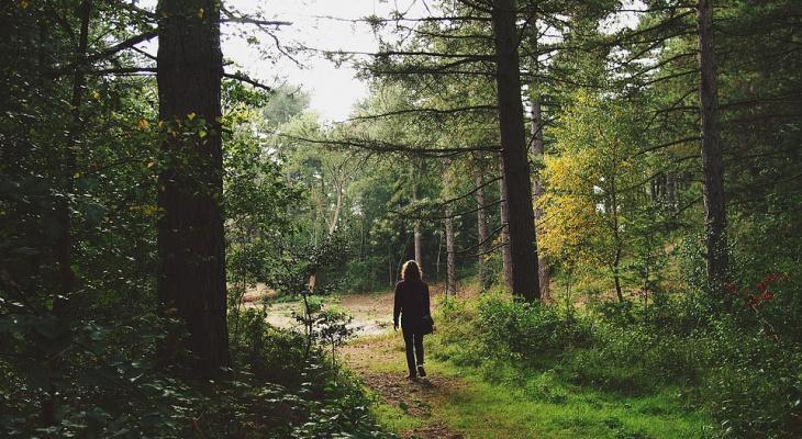 Жительница Марий Эл, которая получила травму и потерялась в лесу, перестала выходить на связь