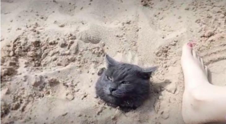 В соседней с Марий Эл республике дети закопали кота в песок