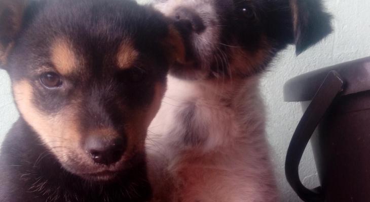 Жестокие жители Марий Эл бросили маленьких щенков умирать