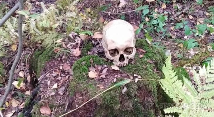 Житель Марий Эл пошел за грибочками, а нашел череп