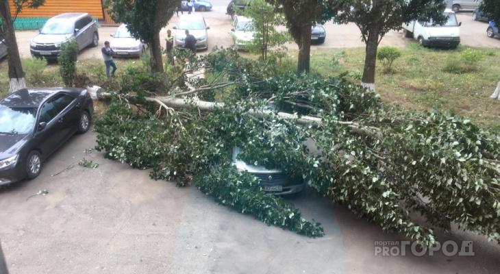 В Йошкар-Оле сильный ветер свалил дерево на припаркованное авто