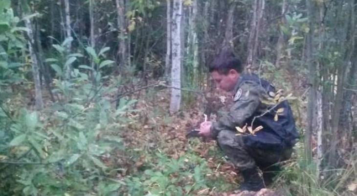В Марий Эл человеческие останки, которые нашли посреди леса, опознали родственники