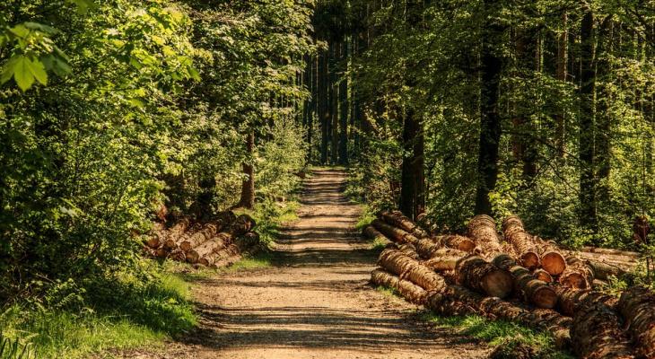 В лесах Марий Эл появятся нормальные дороги