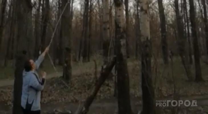В Йошкар-Оле загнанный собаками котёнок сидит на дереве более пяти дней