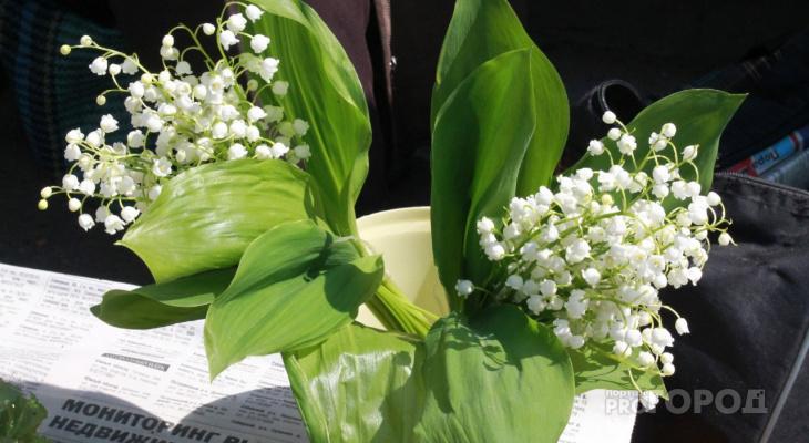 """Йошкаролинка возмущена торговлей цветов, которые занесены в """"Красную книгу"""""""