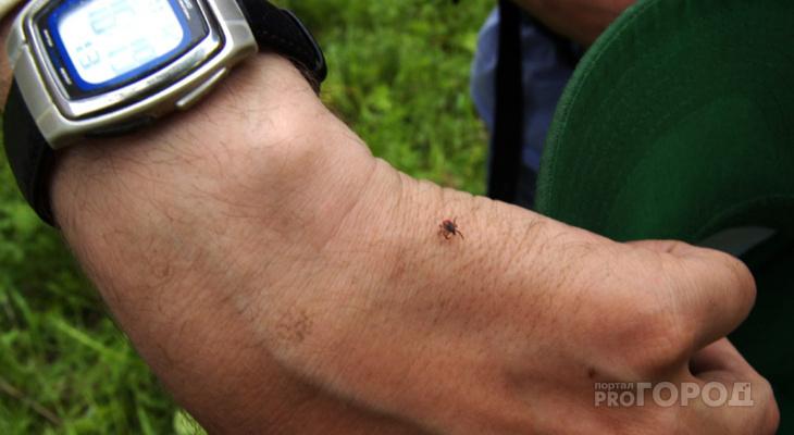 В Марий Эл зарегистрирован первый случай клещевой инфекции