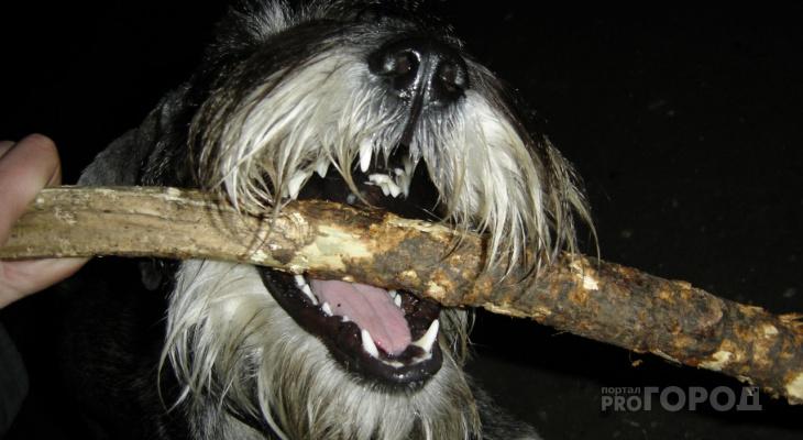 ШОК! В Йошкар-Оле обезумевшая собака едва не загрызла юного баскетболиста