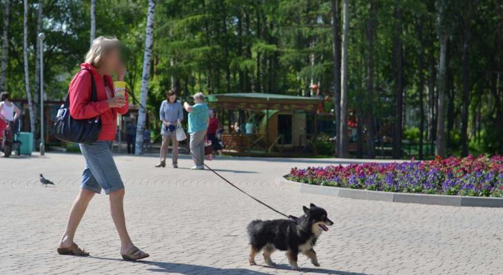Как йошкаролинцы «по-правильному» должны выгуливать своих животных?