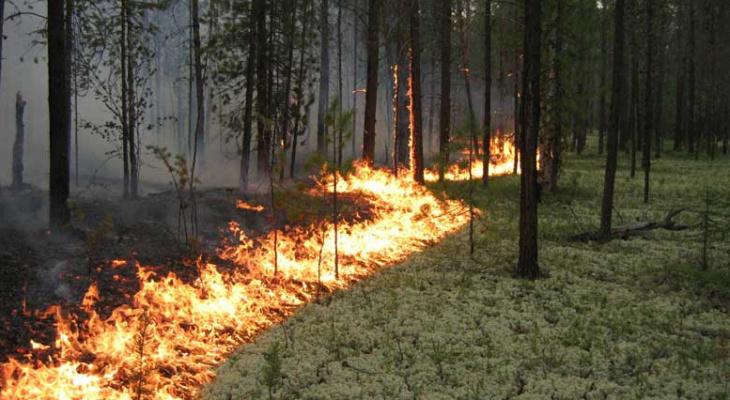 В Марий Элобъявили «оранжевый» уровень пожарноопасности
