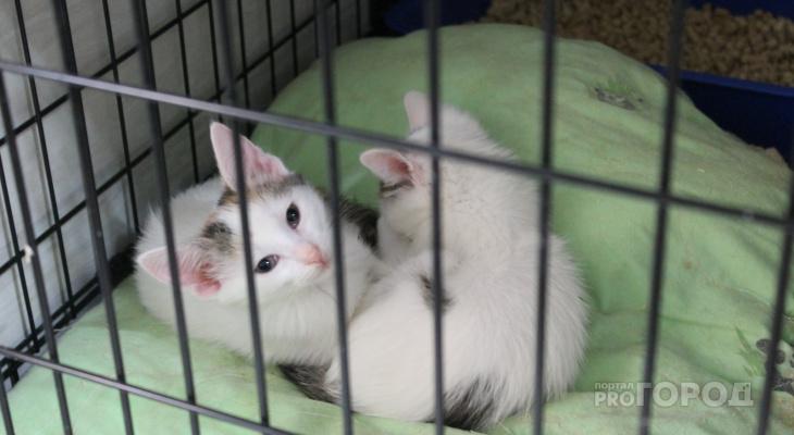Йошкаролинка о выставке кошек: «Их всех трогают, а им негде укрыться»