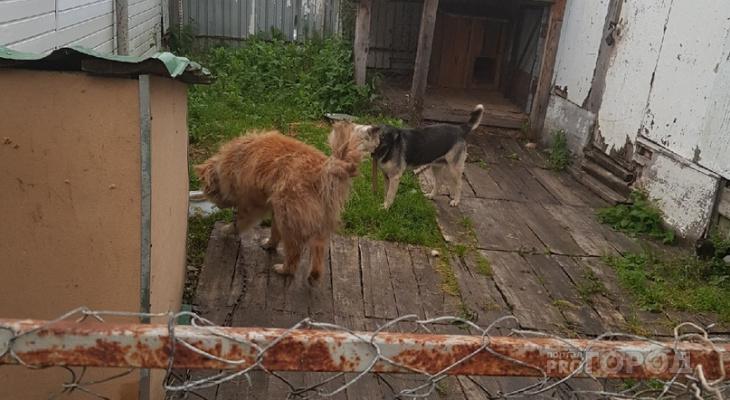 Более тысячи спасенных жизней: волонтер из Марий Эл рассказала про День бездомных животных