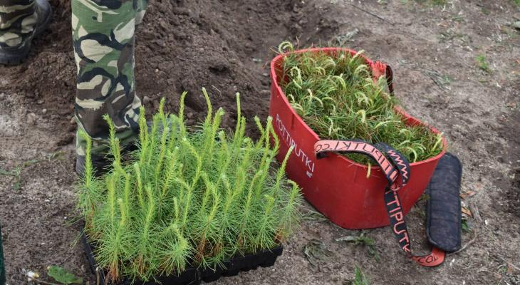 «Лес вместо букета»: жители Марий Эл принимают участие в акции к 1 сентября
