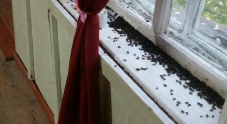 Жилые дома в Марий Эл атаковали полчища мух: в чем причина?