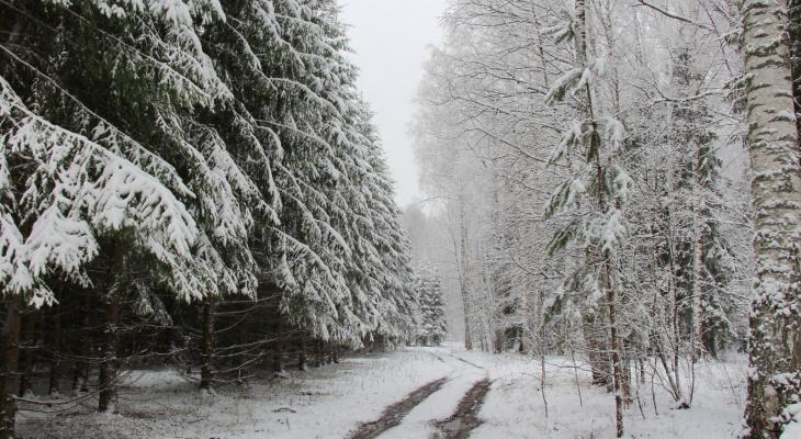 О погоде в Йошкар-Оле - в выходные ожидается «плюс»