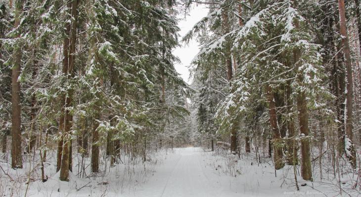 На снегоходе, машине и пешком: заблудившегося жителя Марий Эл искали более четырех часов