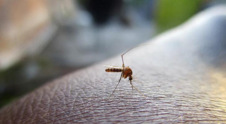 Из-за аномально теплой зимы могут исчезнуть комары