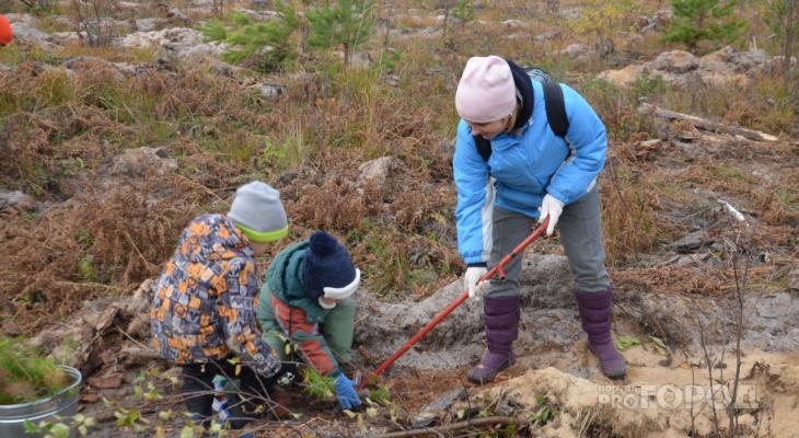 Более 200 тысяч деревьев посадят в Марий Эл