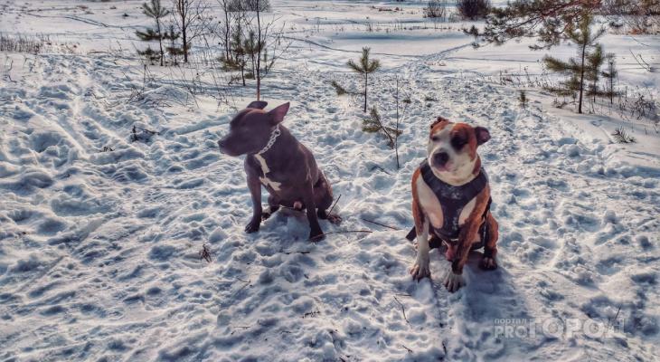 Советы для йошкаролинцев: как правильно выгуливать собаку на самоизоляции