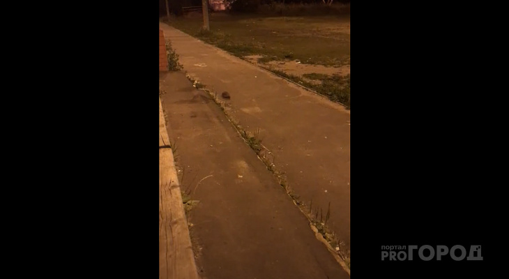 Видео дня: йошкаролинцы поздно вечером встретили во дворе необычного прохожего