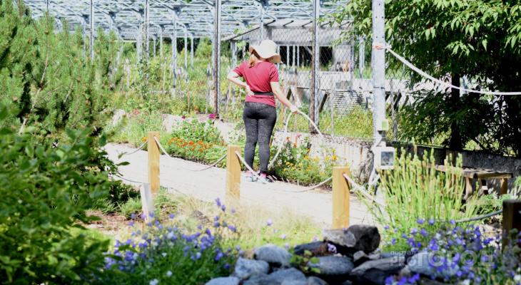 В Йошкар-Оле появится уникальный китайский сад