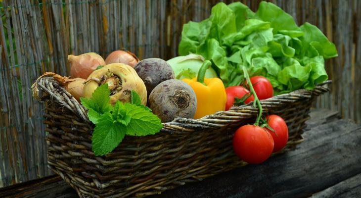 Советы для садоводов: что нужно делать йошкаролинцам на участке в июле?
