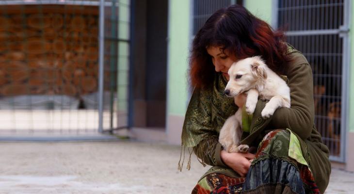 Жители Марий Эл помогут бездомным животным