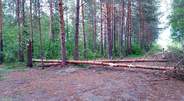Жителя Марий Эл насмерть придавило деревом