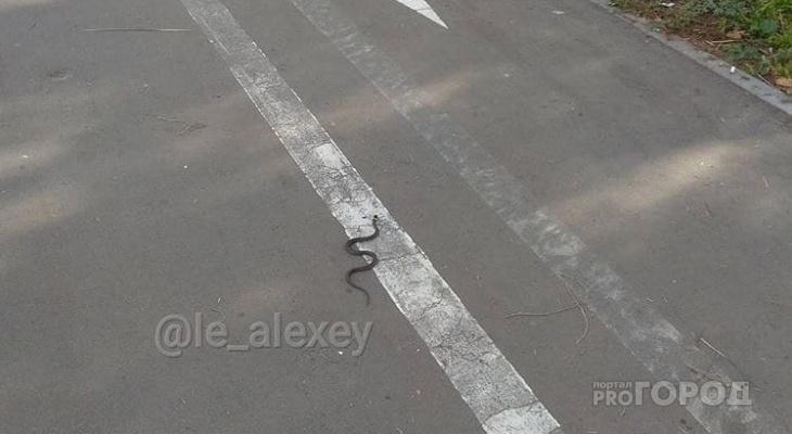 Йошкаролинцы встретили змею в центре города