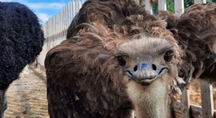 ТОП-5 самых дорогих животных, продающихся в Йошкар-Оле