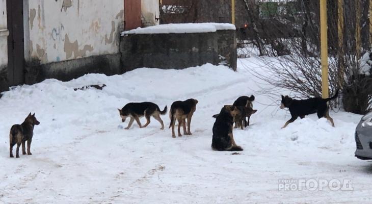 В пригороде Йошкар-Олы стаю агрессивных собак стерилизовали и отпустили обратно
