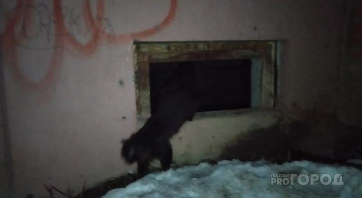 Йошкаролинцы спасли замурованных в подвале котов