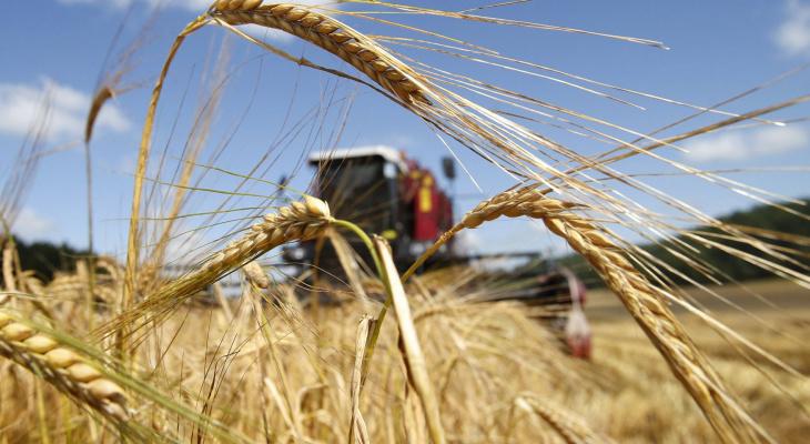 Экспорт агропромышленной продукции из Марий Эл составил 15 миллионов долларов