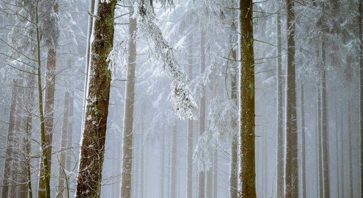 Сотрудник Кокшайского лесничества незаконно вырубил несколько гектаров леса