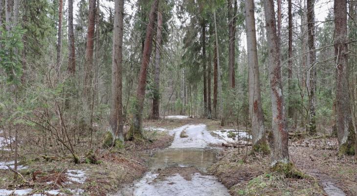 В лесах Марий Эл орудовала банда браконьеров