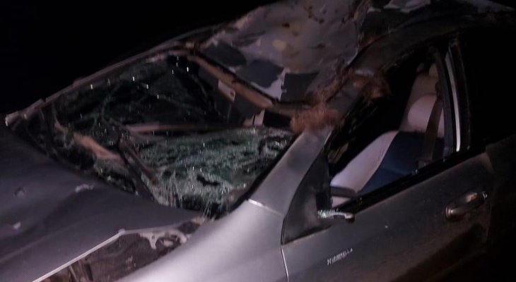 В Марий Эл мужчина за рулем авто врезался в лося
