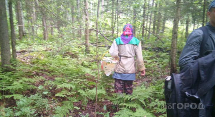 «Шляпка гриба не меньше 1,5 сантиметров»: в Марий Эл ввели новые правила сбора ягод и грибов