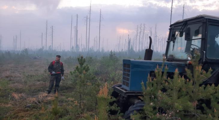 В Марий Эл полыхает Сосновый бор, который горел в 2010 году