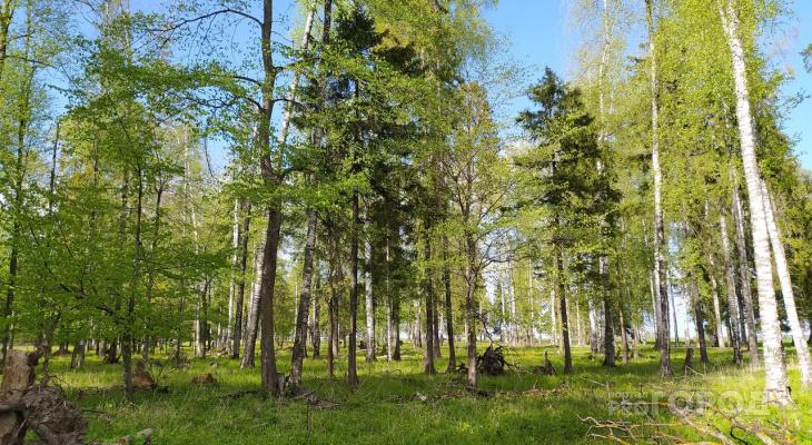 Марий Эл лидирует среди регионов по эффективному пользованию леса
