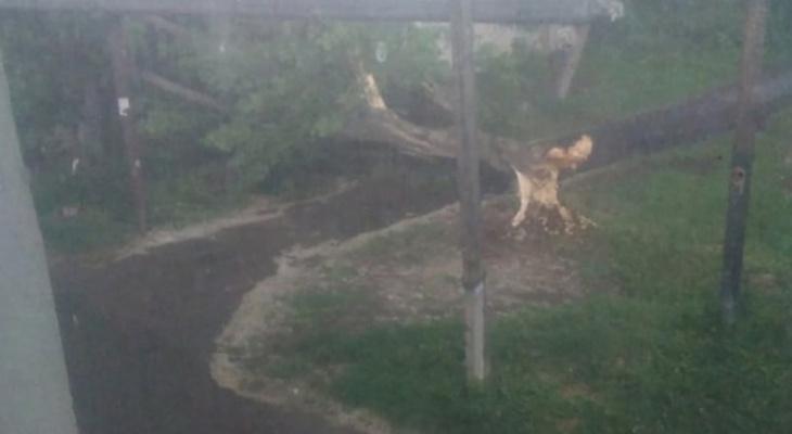 """Вчерашняя буря в Йошкар-Оле пронеслась не бесследно: об этом """"говорят"""" даже деревья"""