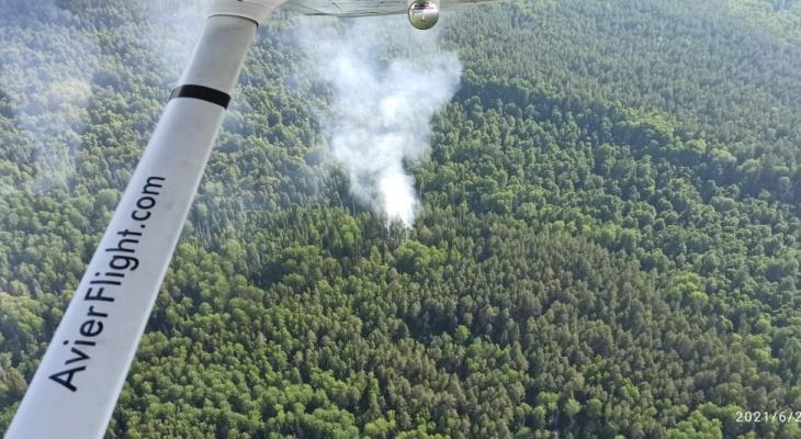 «Не ходите в лес на этой неделе!»: в Марий Эл ожидают высокую пожароопасность