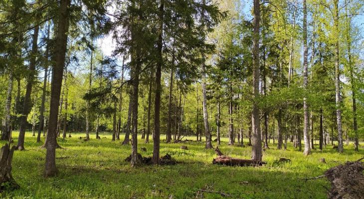 Житель Марий Эл получит 7 лет тюрьмы за незаконную вырубку леса