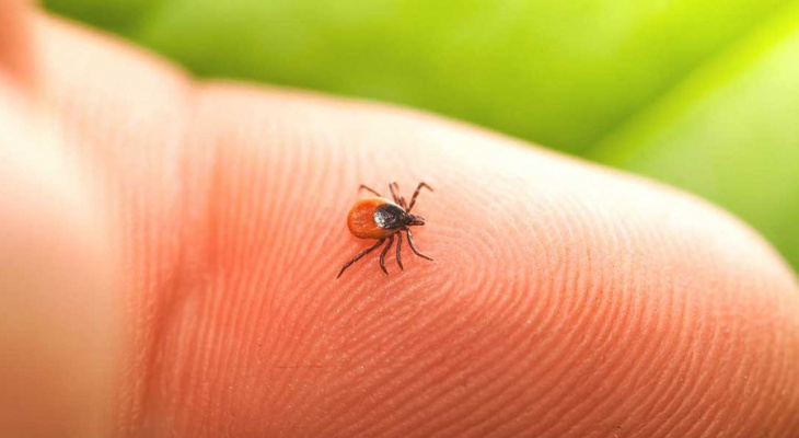 С начала сезона от укусов клещей в Марий Эл пострадало более 300 детей