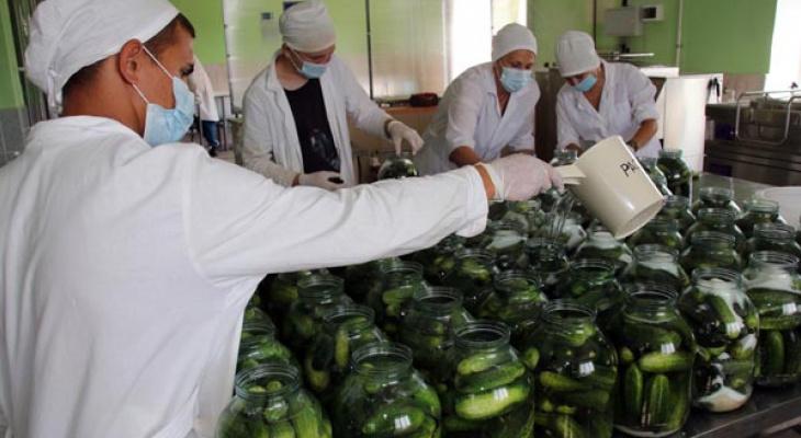«На закуску»: в Марий Эл осуждённые замаринуют несколько тысяч банок огурцов