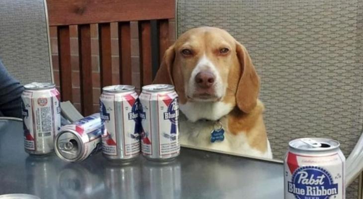 Пенный напиток для собак