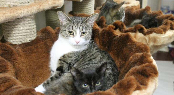 Кот приносит доход: Йошкаролинцы смогут зарабатывать деньги на своих любимцах