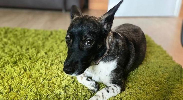 «Почему к животным относятся безответственно?»: россиянке вернули потерянную собаку из Домодедово