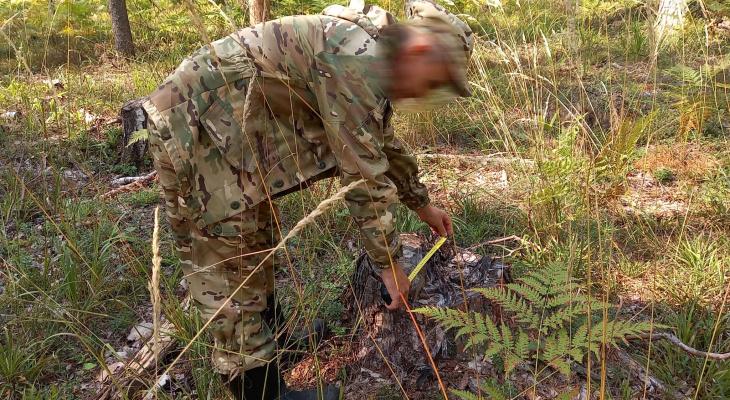 «Что-то пошло не по плану»: в Марий Эл двое лесничих незаконно вырубали деревья