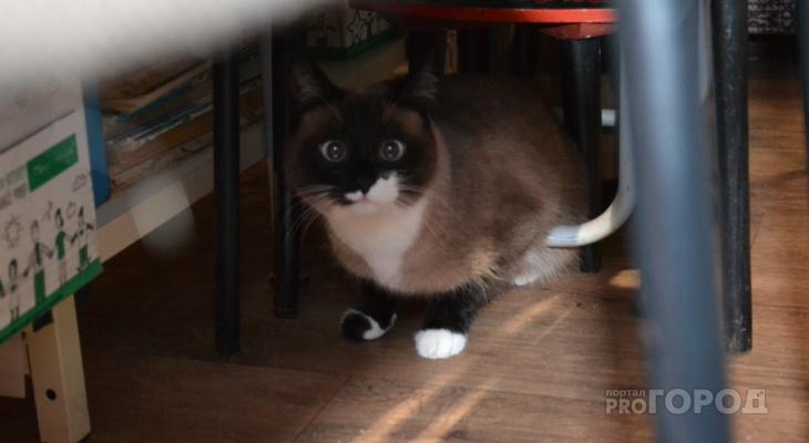 «Мгновенная карма»: россиянин поплатился жизнью за пинок беззащитного котёнка